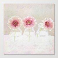 3 daisies Canvas Print