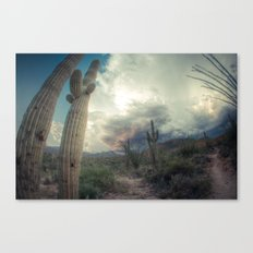 Sabino Canyon Monsoon  Canvas Print