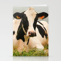 Holstein cow facing camera Stationery Cards