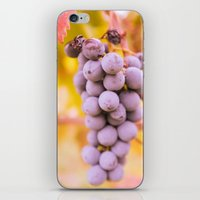 In vineyard iPhone & iPod Skin