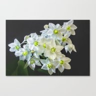 Amazon Lily  Canvas Print