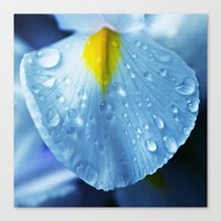 Drops and blue Canvas Print