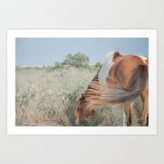 wild horse, assateague Art Print