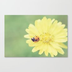 A Flower for My Lady Canvas Print