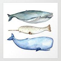 S'whale Art Print