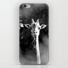 portrait of giraffe iPhone & iPod Skin