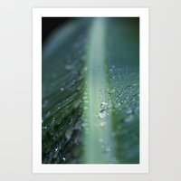 banana leaf rain drops hawaii Art Print