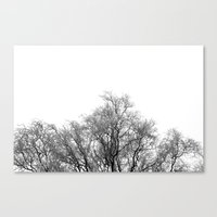 A Tree And His Crown In … Canvas Print