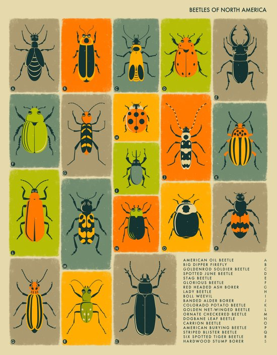 BEETLES OF NORTH AMERICA Art Print