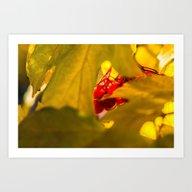 Autumn Fruits - Squashbe… Art Print