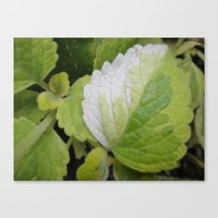 Shades of green Canvas Print