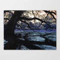 Oak Shadows Lavendar Canvas Print