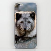 Vulpes Lagopus iPhone & iPod Skin