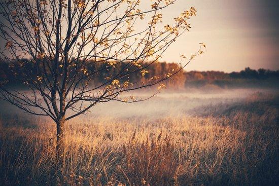 An Early Autumn's Frost Art Print