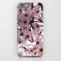 Sakura in Kyoto iPhone 6 Slim Case