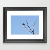 The Magpie that Comes and Goes Framed Art Print