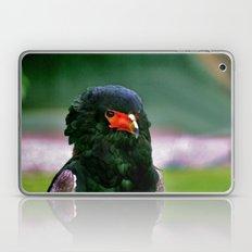 Bateleaur Eagle Laptop & iPad Skin