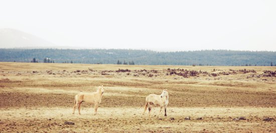 Two Oregon Horses Art Print