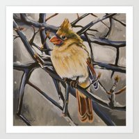 Northern Cardinal Female Art Print