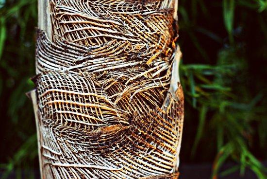 Burlap Tree Art Print