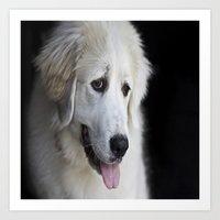Great Pyrenees -Forest- Art Print