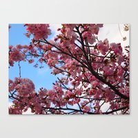 Cherry Blossoms IV Canvas Print