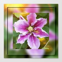 Clematis in Sunshine Canvas Print