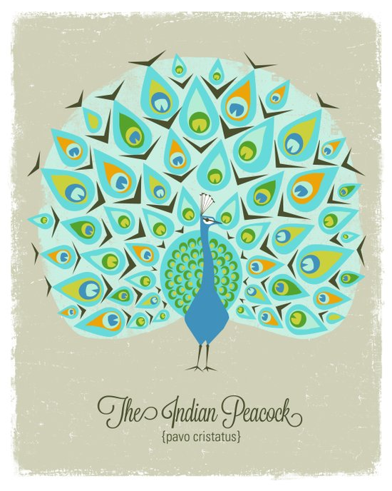 The Indian Peacock Art Print