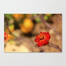 flower from my trip to israel Canvas Print