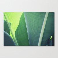 Plantain #1 Canvas Print
