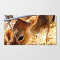 HoliCow Canvas Print