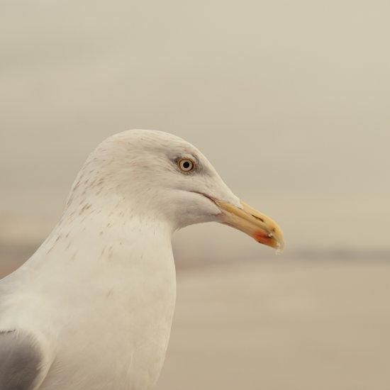 Portrait of a Bird Art Print