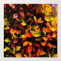 Red, Yellow, Green Canvas Print