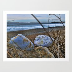 Shells and Beach Stones Art Print