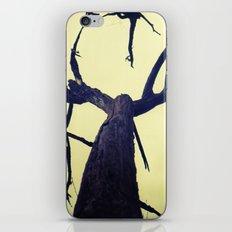 Aragosta iPhone & iPod Skin
