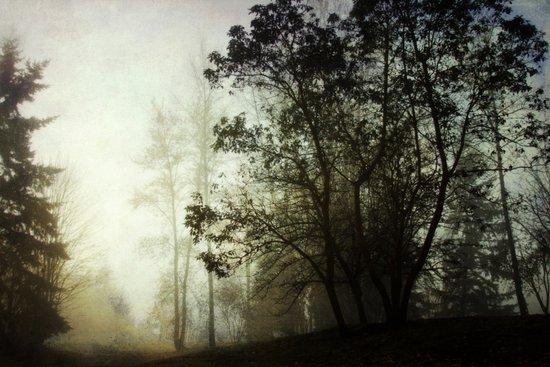 foggy Canvas Print