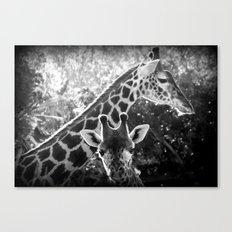 two giraffes Canvas Print