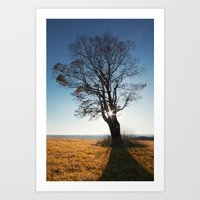 Between The Branches Art Print