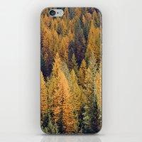 Autumn Tamarack Pine Tre… iPhone & iPod Skin