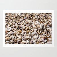 Shells For Days  Art Print
