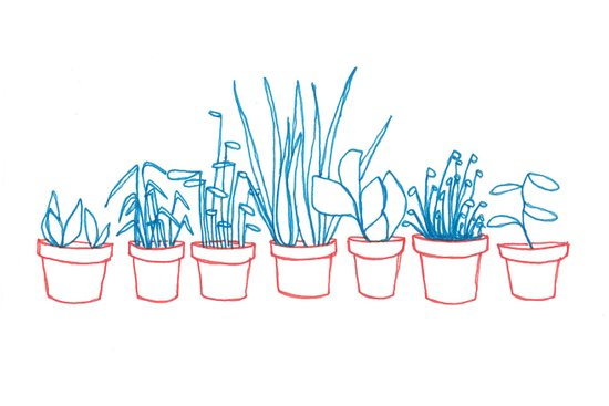 Teal Plants in Red Pots Art Print