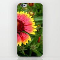 Summer Colours iPhone & iPod Skin