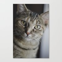Piccolo The Cat Canvas Print