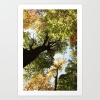 Fall Canopy - Woodland T… Art Print