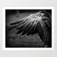black wing Art Print