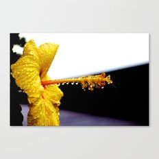 Wet Hibiscus Canvas Print