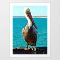 Portrait of a Perky Pelican Art Print