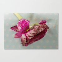 Canvas Print featuring Ranunculus by Fran Walding
