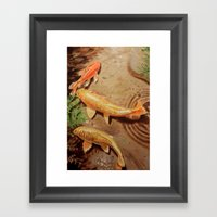 Three Koi Framed Art Print