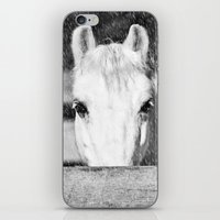 Winter Horse iPhone & iPod Skin